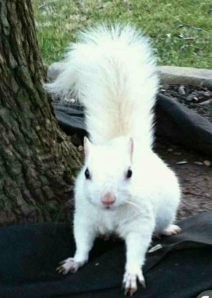 Ever seen a white squirrel?