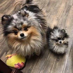 Fluffy mom and fluffy daughter.