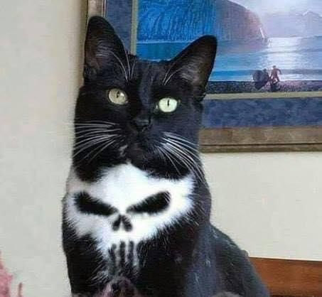 Meet Frank the cat!! <3