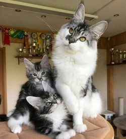 Momma and her babies! <3