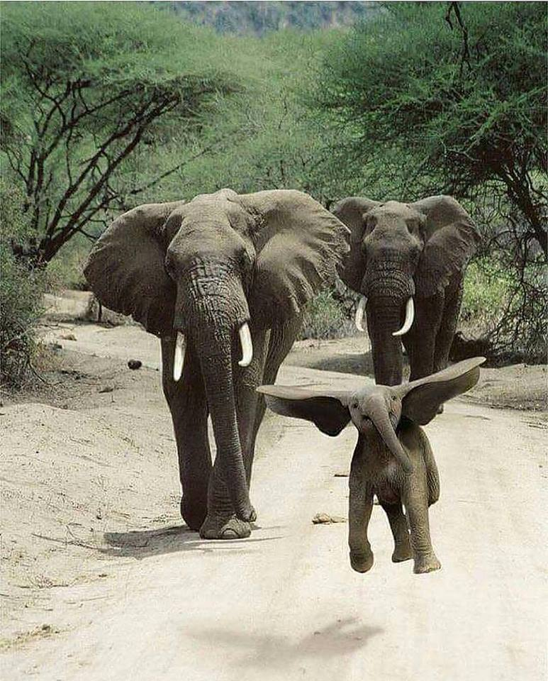 One word for this elephant family photo please?