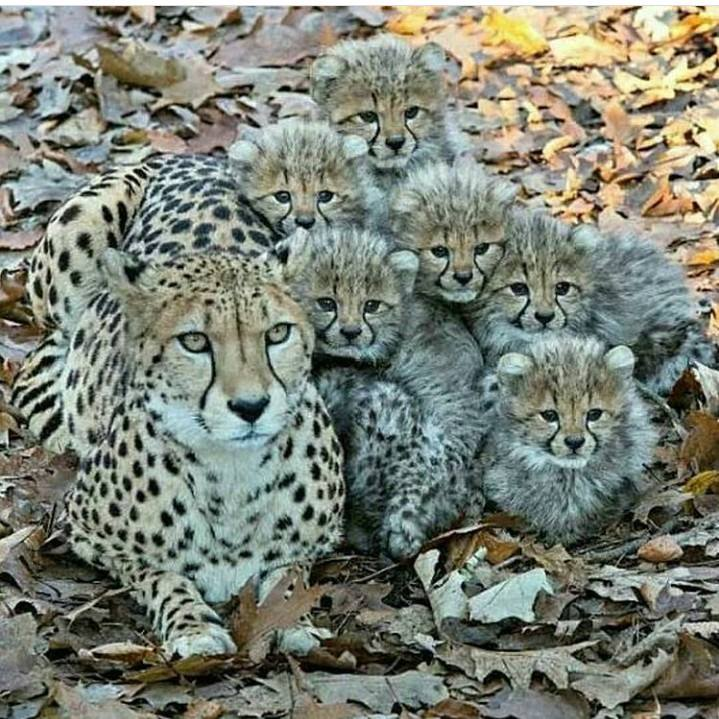 One word for this proud mom and her babies? :)