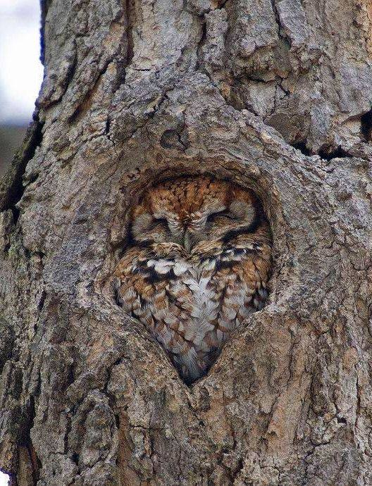 Owl and tree become one.
