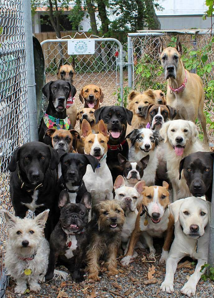 Possibly the best doggy daycare photo ever taken.