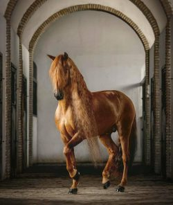 Rate this beautiful horse from 1 to 10