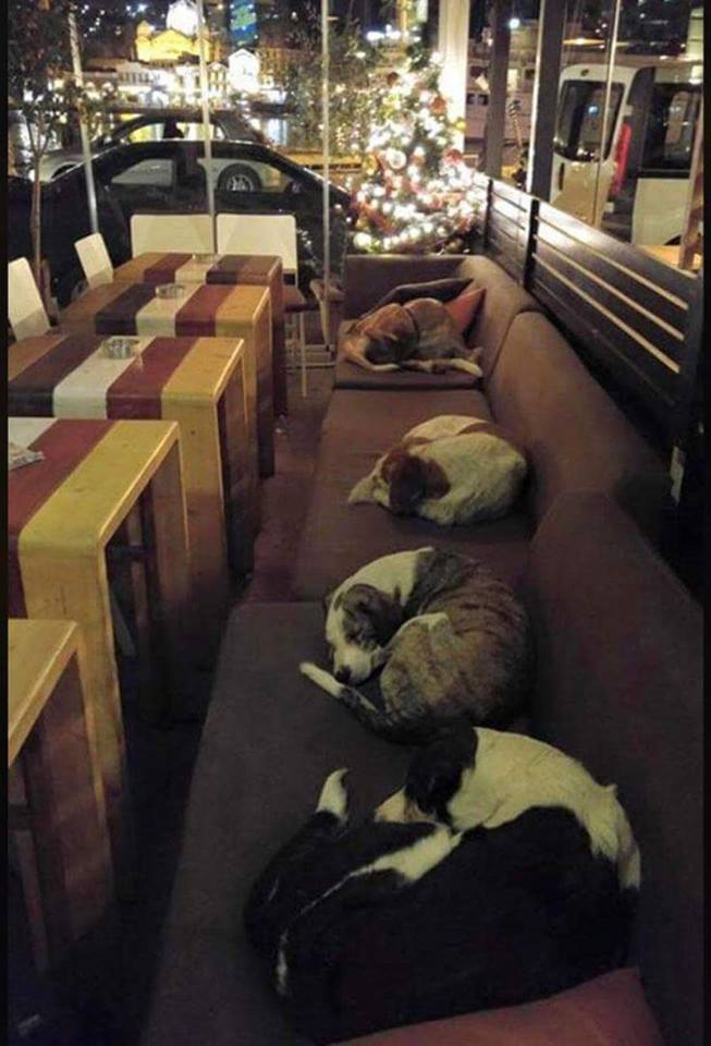 This coffee shop in Greece lets the stray dogs sleep inside every night after the customers leave.