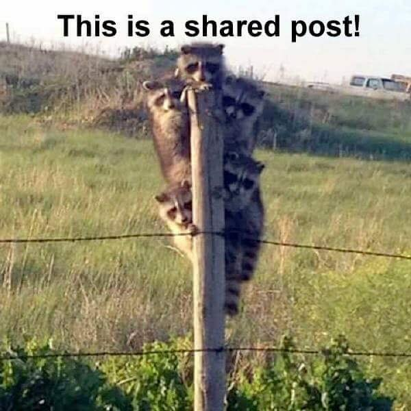 This is a shared post! This is a shared post!