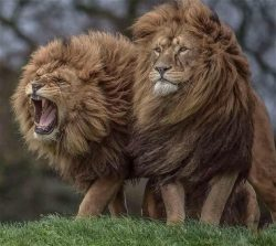 Two Majestic Brothers. :o   Say something about this photo. :)