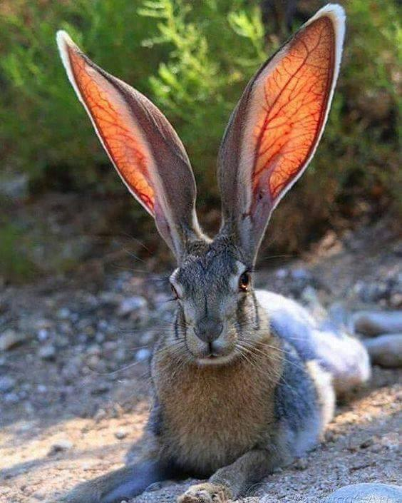 What big ears you have! :)