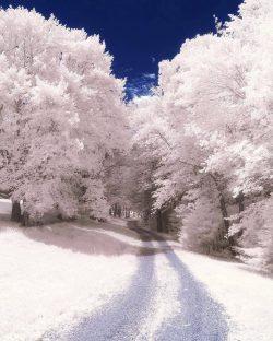 White path  Andover, Massachusetts.