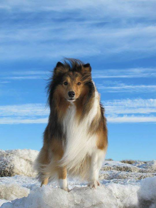 Who thinks this dog is beautiful? :)