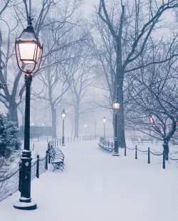 Winter in Washington Square Park, NYC
